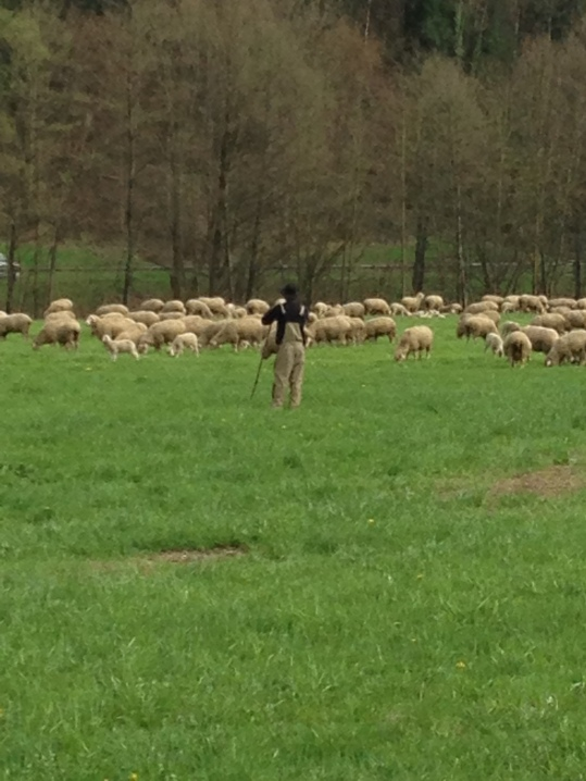 The shepard and his flock